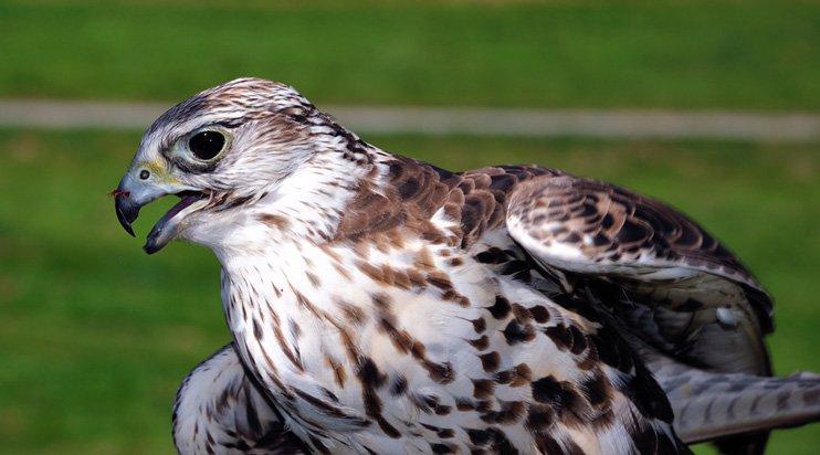 ochrona-przed-ptakami
